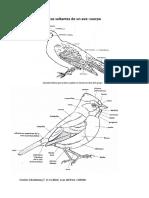 Clasificacion Aves 2018
