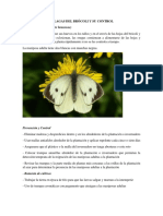 Las Principales Plagas Del Brócoli y Su Control