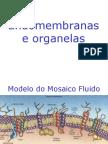 Endomembranas e Organelas