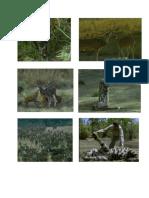 ekologi harimau