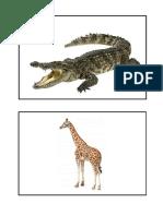 Tarjetas Animales Salvajes