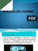 sistema+limbico
