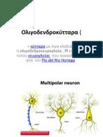 Ολιγοδενδροκύτταρα