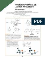 18 - Ácidos Nucleicos. Estructura Primaria