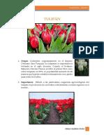 tulipan.docx