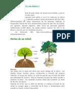 QUE-ES-UN-ÁRBOL-web