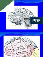CURS Neuropsihol 2