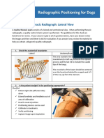 Thoracic Positioning Course Handout - Radiographic Positioning for Dogs