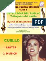 352165033-triangulos-del-cuello-pdf.pdf