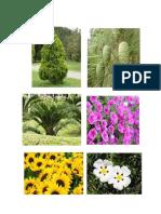 plantas del mundo.odt