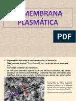 membranaplasmatica-110109125746-phpapp02 (1).pptx