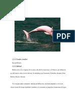 delfin rosado-sachavaca-pudu