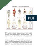 Los Órganos del Cuerpo y su Relación con Las Emociones.docx