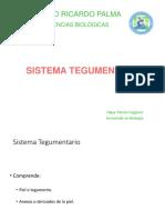 13 Sistema