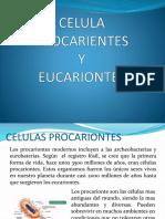 CELULA PROCARIENTES2