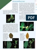 PFRD_1999_Amaranthaceae