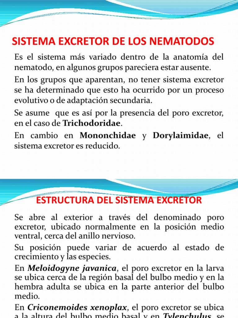 sistema_escretor.pdf;filename*= UTF-8\'\'sistema%20escretor.pdf