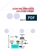 1clase Piruvato Dh c. Krebs Faz