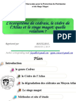 magot1.pptx