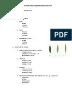 Descripcion de Caracteres Morfologicos en Olivo