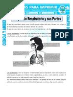 Ficha-El-Aparato-Respiratorio-y-sus-Partes-para-Cuarto-de-Primaria.doc