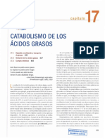 CATABOLIS ACID GRASOS.pdf