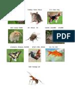 Animales en Poqoman