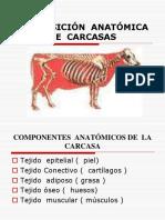 Composición Anatómica de Carcasas