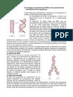 Descripción de La Función Biológica e Importancia Del DNA en Las Características Hereditarias de Los Organismos