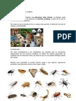 clasificacion de los animales acuaticos 123.docx