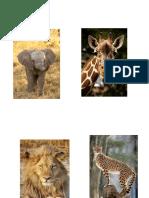 Animales Safari