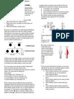 EVALUACION  SUSTENTATORIA FINAL PERIODO II OVENO 2014.docx