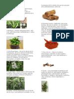 30 plantas medicionales