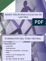 Bases Neuropsicologicas DEA