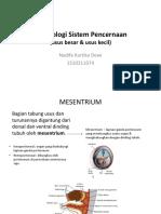 Embriologi Sistem Pencernaan