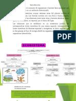 Diapositiva de Medio Ambientezzzzzzzzz