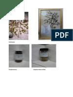 Herbarium Dan Simplisia