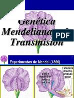 Mendel y Chi Cuadrado