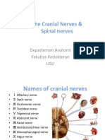 (K33)cranial and spinal nerve.ppt