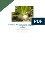 Cultivo de NABO