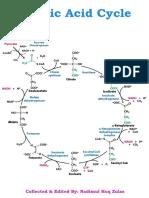 Citric Acid Cycle