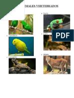 25 Animales Vertebrados 25 Invertebrados