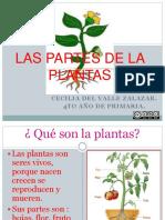 Las Partes de La Plantas-1