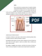 ESTRUCTURA DEL DIENTE.docx