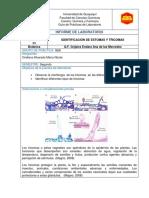 Informe 9 Botanica.docxnicole