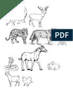 Habitat Haiwan 1