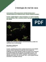 Grupo revê biologia do mal da vaca louca - ciência - biologia - saúde