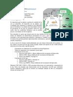 BMD T8 Fotomorfogénesis en Plantas