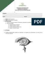 Taller Sistema Nervioso Practica