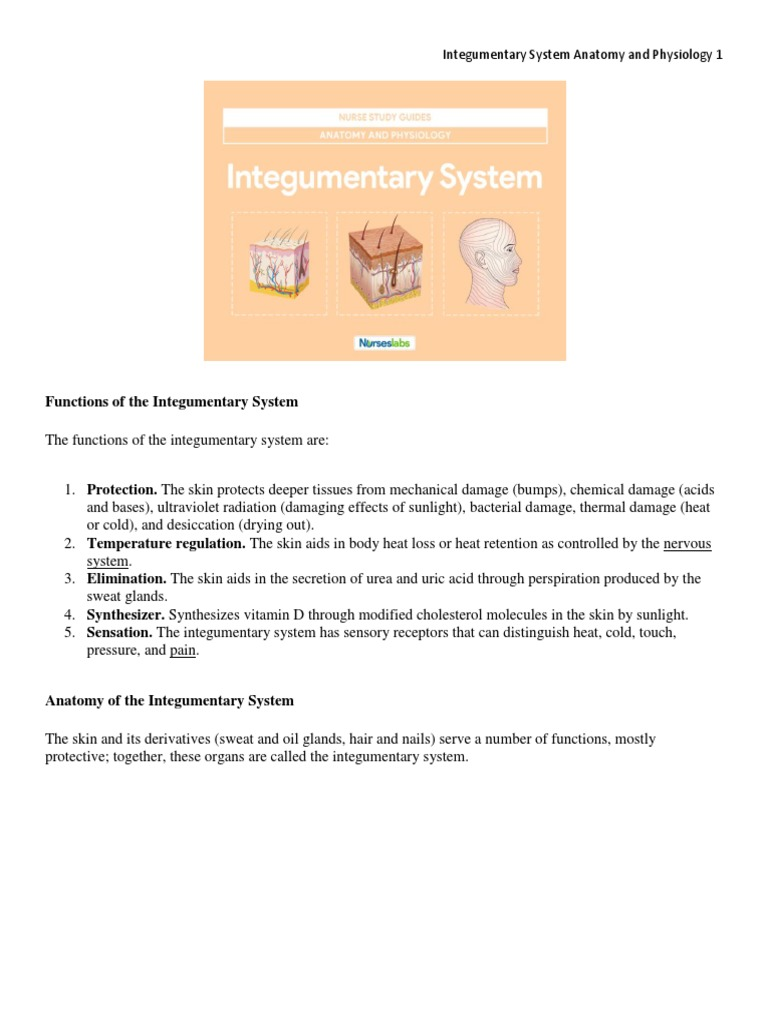 Integumentary System Anatomy and Physiology | Integumentary System ...